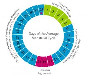 Cikli menstrual, kur mund të ngelni shtatzënë