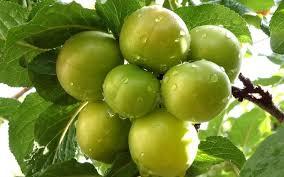 Kumbullat jeshile, ky frut i trupit dhe i shpirtit
