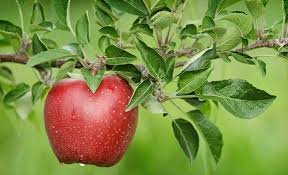 Dieta me mollë